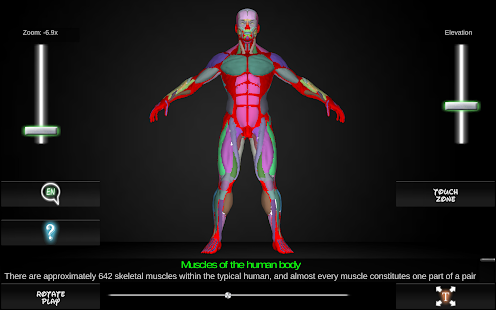 Muscular System: Anatomy and Physiology | Muscle ...