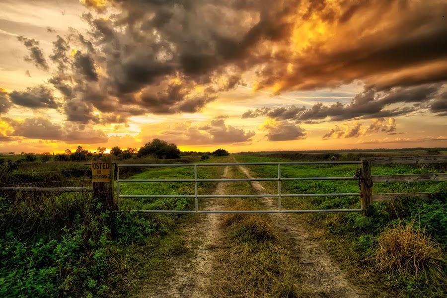 by Nancie Rowan - Landscapes Prairies, Meadows & Fields