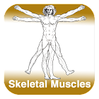 Anatomy - Skeletal Muscles icon