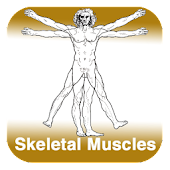 Anatomy - Skeletal Muscles