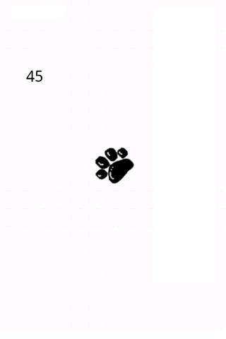猫の手の方位磁石
