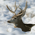 Deer Hunters Live Wallpaper icon