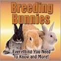 Rabbits Breeding