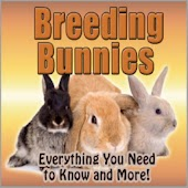 Rabbits Breeding