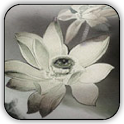 3DKoi and Lotus live wallpaper icon