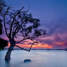 Dance with the Wind by Ram Suson - Landscapes Waterscapes ( changi boardwalk, trees and water, sunset at changi boardwalk, waterscape, singapore sunset, trees, singapore )