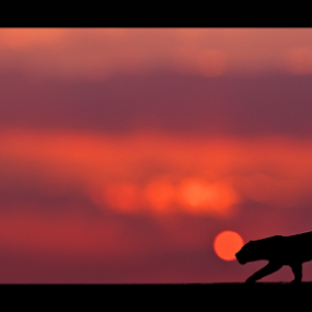 The Urban Leopard by Ajith Unnikrishnan - Artistic Objects Toys ( toy, silhouette, still life, art, leopard )