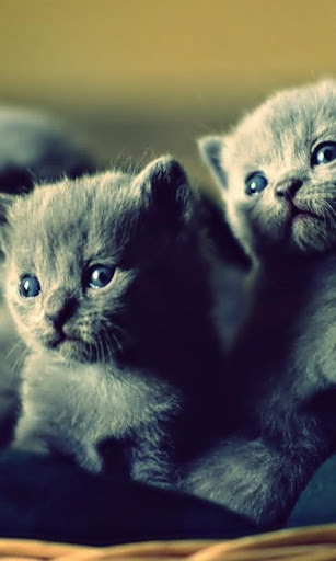 Cats Happy HD Wallpaper