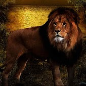 Lions Free HD Live Wallpaper