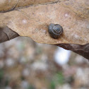 Forest snail?