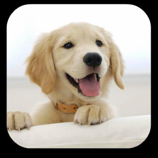 个人化の子犬アニメ壁紙 LOGO-記事Game