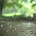 Raindrops Live Wallpaper icon
