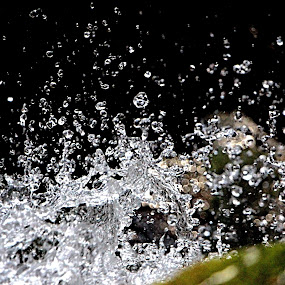 by Colin Wood - Nature Up Close Water (  )