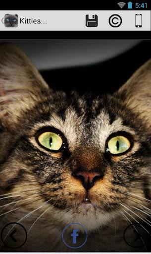 玩個人化App|Galaxy tab Cat live Wallpapers免費|APP試玩