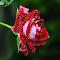 red shade.jpg