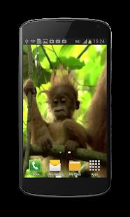 Baby Monkey Live Wallpaper - screenshot thumbnail