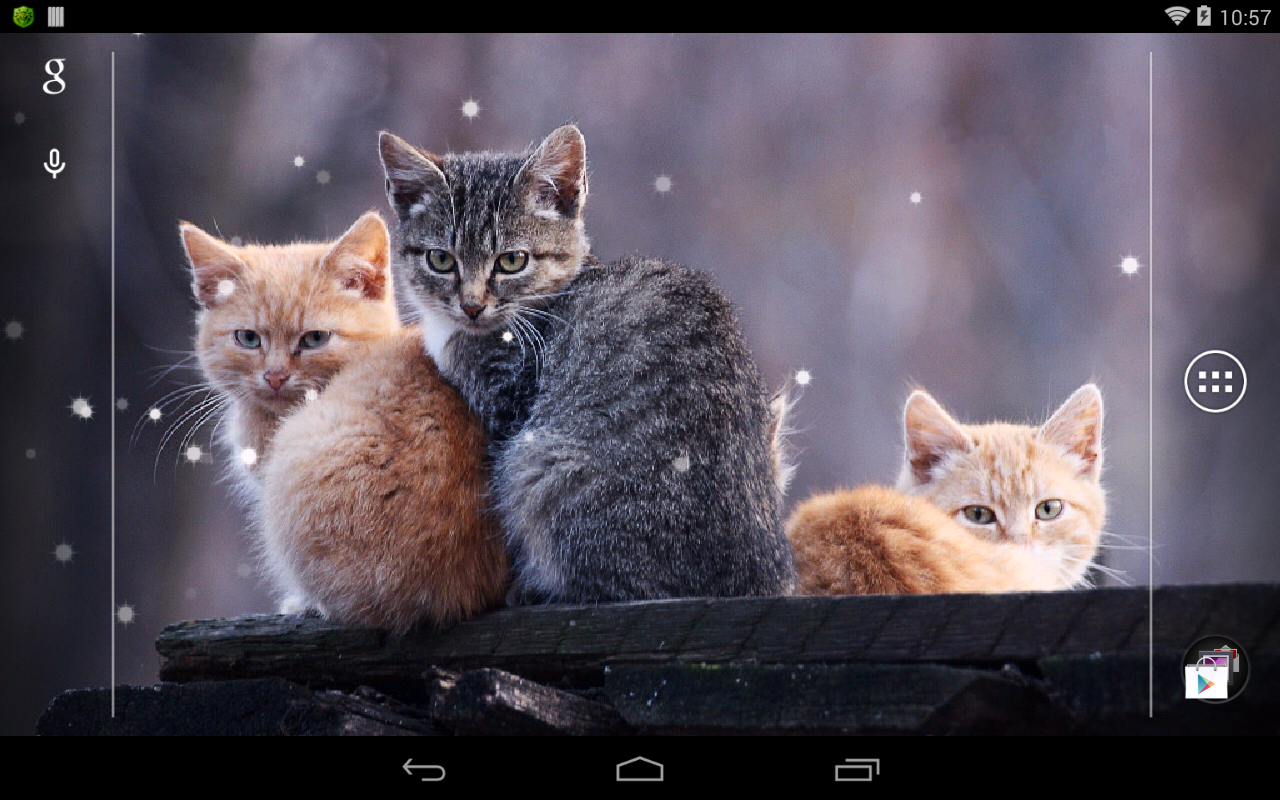 Cat Live Wallpaper  Android Apps on Google Play