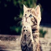 Cute Tom Cats Wallpapers