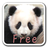 PandaWall FREE -Live Wallpaper
