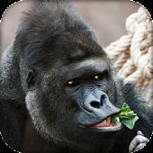 Banana Monkey Gorilla Kong