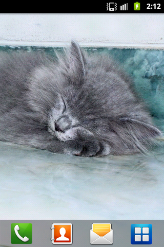 Persian Cat Wallpaper - screenshot