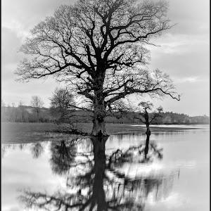 Stour tree bb mono.jpg
