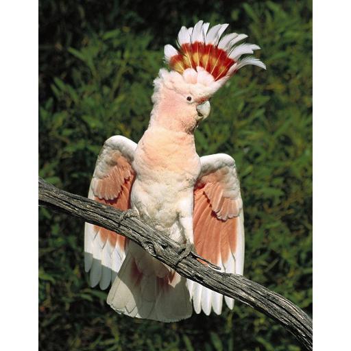 个人化の鳥の壁紙 LOGO-記事Game