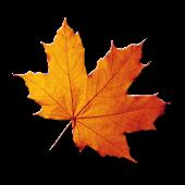 Autumn Theme - PA/CM11 theme