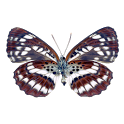 Draw your name with butterfly icon
