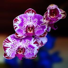 by Cezar Pegoraro - Flowers Flower Arangements