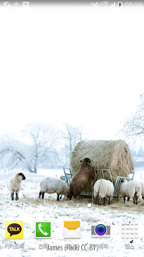 평화로운겨울양배경
