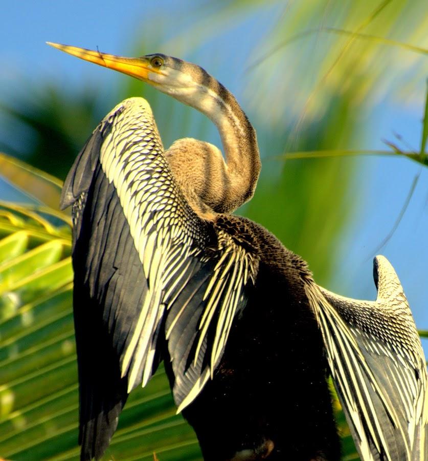 by Abhishek Majumdar - Animals Birds