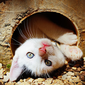 cat in a tube by Charles Saunders - Novices Only Pets ( hidding, kitten, sweet, play, cute, #GARYFONGPETS, #SHOWUSYOURPETS )
