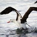 Albatross Live Wallpaper Pro icon