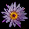 purplenew1.jpg