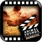 Best Domestic Animals Sounds icon