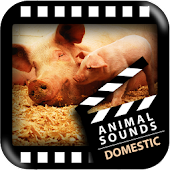 Best Domestic Animals Sounds