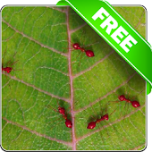 Red ants free live wallpaper