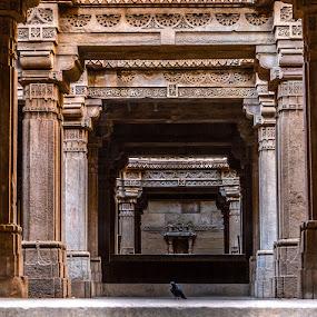 Adalaj Stepwell by Himanshu Maya - Buildings & Architecture Architectural Detail