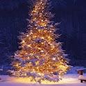 Christmas Tree Wallpapers icon