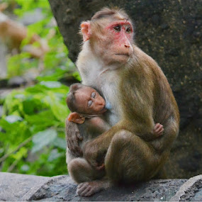 I was always at peace because of the way my mom treated me. by Chobi Wala - Animals Other ( #nature, #mother, #children, #monkey, , animal, monkey )