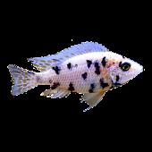 Aquarien Rechner