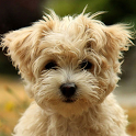 Cute Puppy Dog HD icon