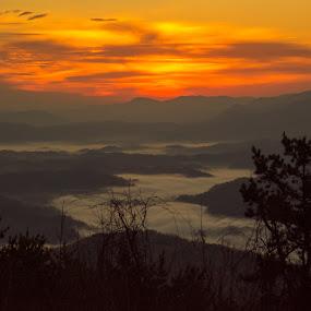 Sunrise over fog by Kaushik Mitra - Landscapes Sunsets & Sunrises ( fog, sunrise, smoke, golden, mist )