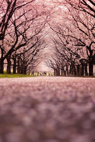 벚꽃 퍼즐