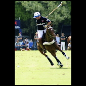 Polo illustrated