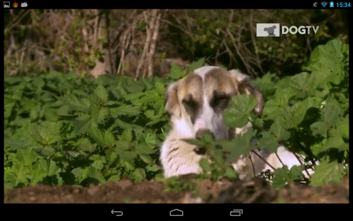 DOGTV Anywhere- screenshot thumbnail