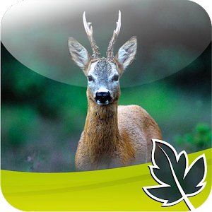 Roebuck Hunt