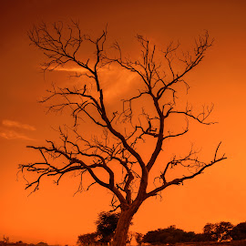 Tree by Aftab Awan - Landscapes Sunsets & Sunrises ( #landscape, #lonelytree, #autumn, #beautiful, #sunset, #tree )