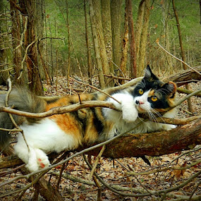 by James Cole - Animals - Cats Playing